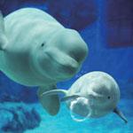 【写真】名古屋港水族館の視察に行ってきました!