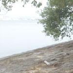【写真】びわ湖清掃