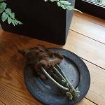 【写真】植物 楽しんでます!