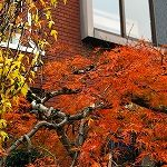 【写真】私、肥ゆる秋