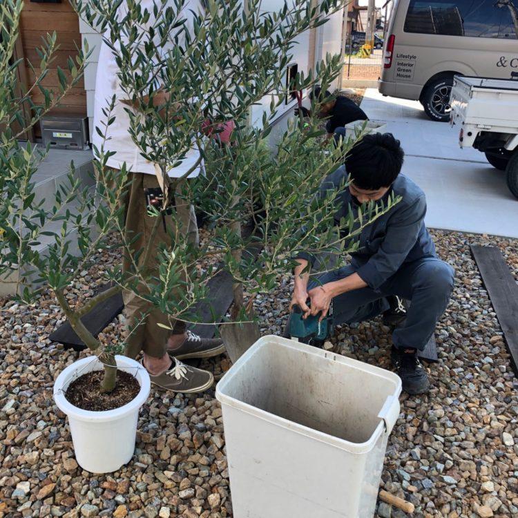 【写真】植栽工事レポート